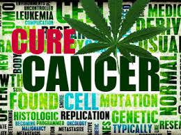 Marijuana an Effective Cancer Fighting Agent?
