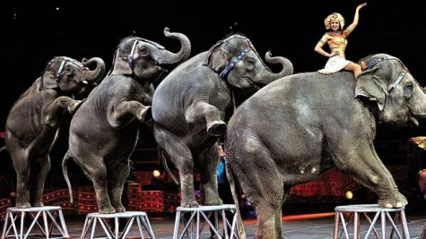 Animal Rights Activists Continue the Fight Against Circus Animal Cruelty
