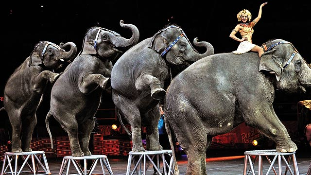 The use of performing animals in circuses has been banned or restricted in 22 states, including Florida.