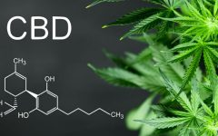 Cannabis-Based CBD Becoming A Part of Everyday Life