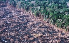 NEWS ANALYSIS: Brazil's indifference to Amazon rainforest deforestation threatens global climate